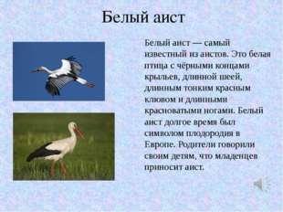 Белый аист Белый аист — самый известный из аистов. Это белая птица с чёрными
