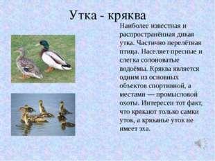 Утка - кряква Наиболее известная и распространённая дикая утка. Частично пере