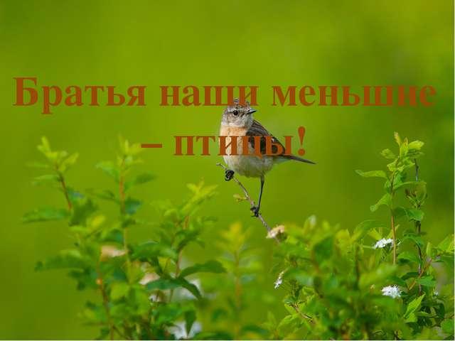 Братья наши меньшие – птицы!
