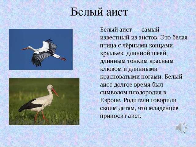 Белый аист Белый аист — самый известный из аистов. Это белая птица с чёрными...