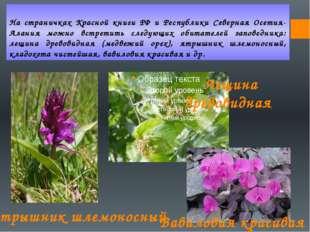 На страничках Красной книги РФ и Республики Северная Осетия-Алания можно встр