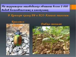На территории заповедника обитает более 2 000 видов беспозвоночных и насекомы