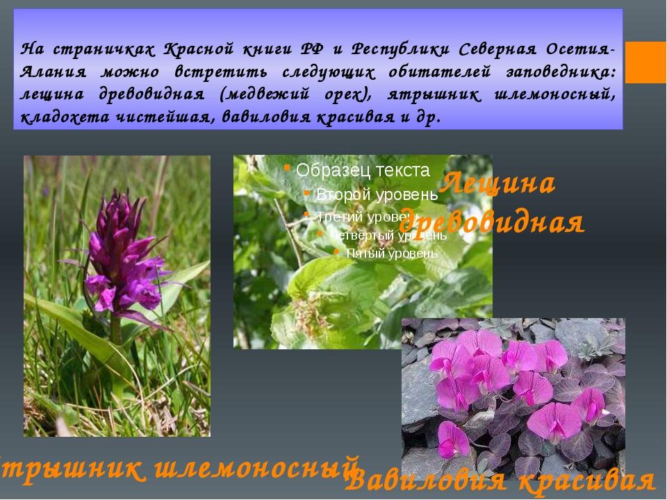 На страничках Красной книги РФ и Республики Северная Осетия-Алания можно встр...