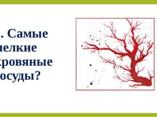2. Самые мелкие кровяные сосуды?