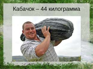 Кабачок – 44 килограмма