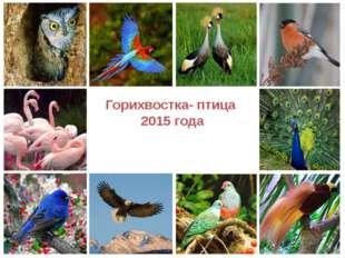 Горихвостка- птица 2015 года ProPowerPoint.Ru