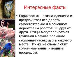 Интересные факты Горихвостка – птичка-одиночка и предпочитает все делать само