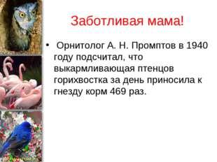 Заботливая мама! Орнитолог А. Н. Промптов в 1940 году подсчитал, что выкармли
