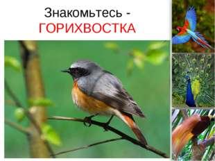 Знакомьтесь - ГОРИХВОСТКА ProPowerPoint.Ru