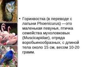 Горихвостка (в переводе с латыни Phoenicurus) —это маленькая певунья, птичка