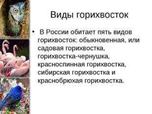 Виды горихвосток В России обитает пять видов горихвосток: обыкновенная, или с
