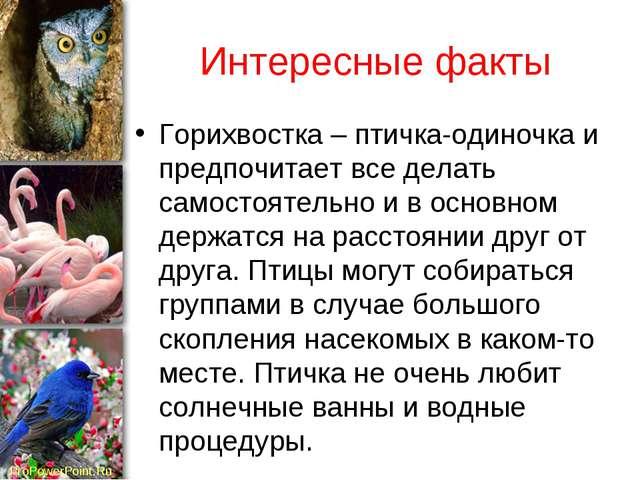 Интересные факты Горихвостка – птичка-одиночка и предпочитает все делать само...