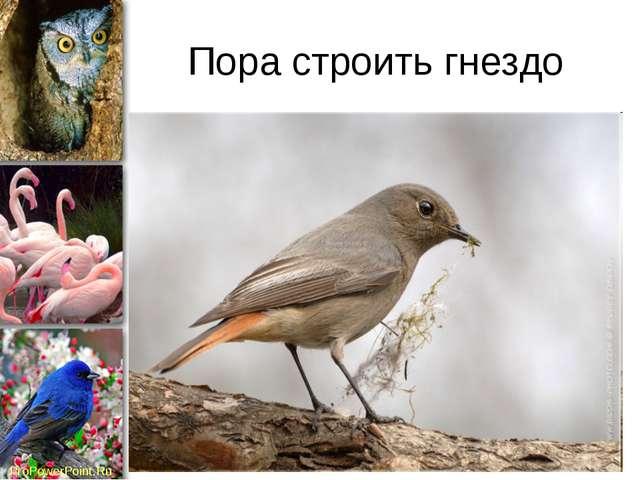 Пора строить гнездо ProPowerPoint.Ru