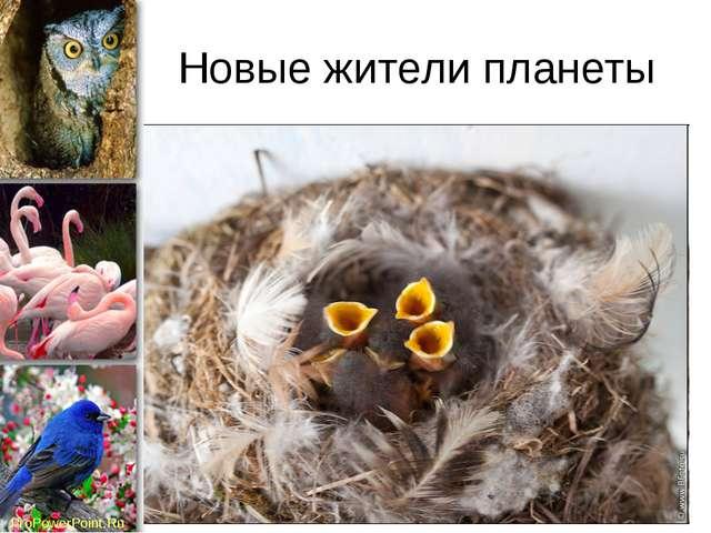 Новые жители планеты ProPowerPoint.Ru