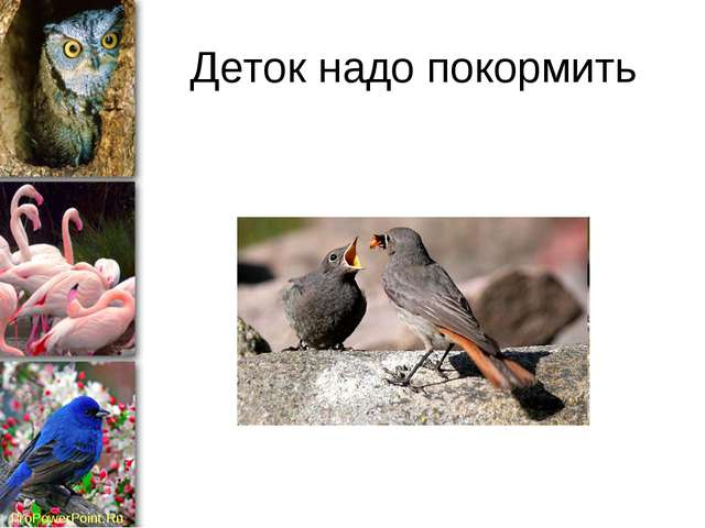 Деток надо покормить ProPowerPoint.Ru