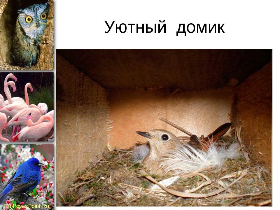 Уютный домик ProPowerPoint.Ru