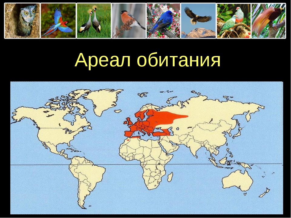 Ареал обитания ProPowerPoint.Ru