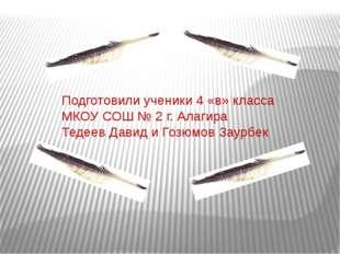 Подготовили ученики 4 «в» класса МКОУ СОШ № 2 г. Алагира Тедеев Давид и Гозюм