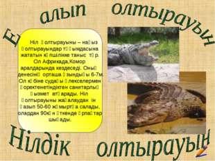 Ніл қолтырауыны – нағыз қолтырауындар тұқымдасына жататын көпшілікке таныс т