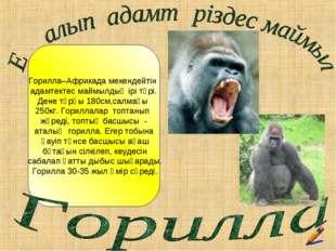 Горилла–Африкада мекендейтін адамтектес маймылдың ірі түрі. Дене тұрқы 180см,