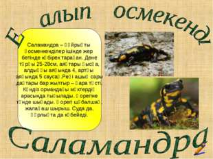 Саламандра – құйрықты қосменкенділер ішінде жер бетінде көбірек тараған. Ден