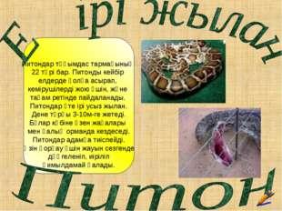 Питондар тұқымдас тармағының 22 түрі бар. Питонды кейбір елдерде қолға асыра