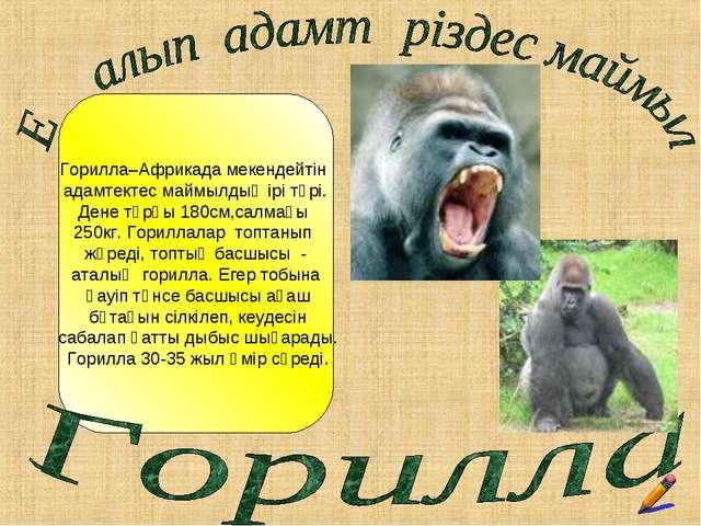 Горилла–Африкада мекендейтін адамтектес маймылдың ірі түрі. Дене тұрқы 180см,...