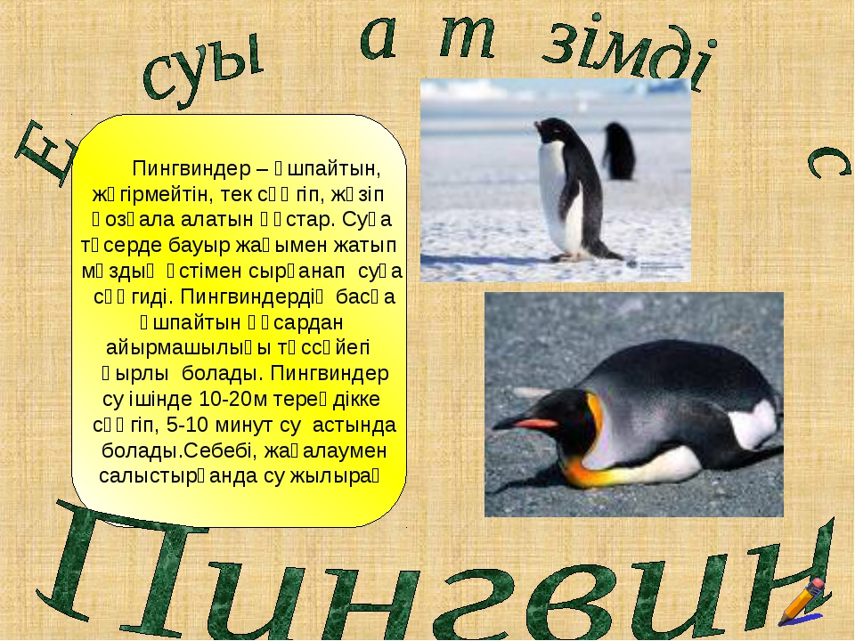 Пингвиндер – ұшпайтын, жүгірмейтін, тек сүңгіп, жүзіп қозғала алатын құстар....