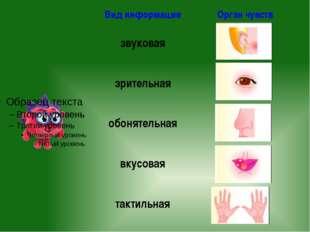 Вид информации Орган чувств звуковая зрительная обонятельная вкусовая тактил