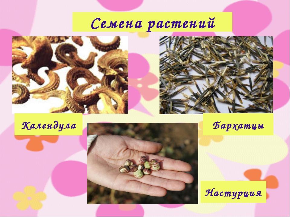 Семена растений Календула Бархатцы Настурция
