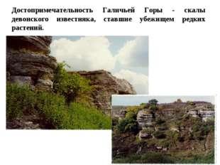 Достопримечательность Галичьей Горы - скалы девонского известняка, ставшие уб
