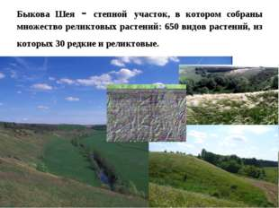 Быкова Шея - степной участок, в котором собраны множество реликтовых растений