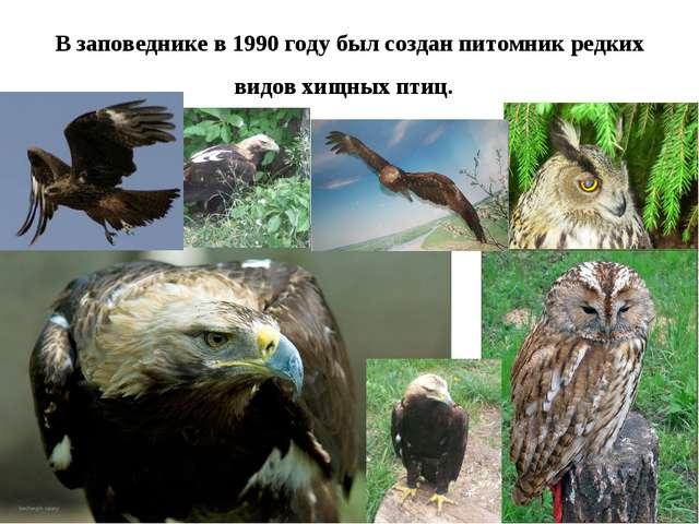В заповеднике в 1990 году был создан питомник редких видов хищных птиц.