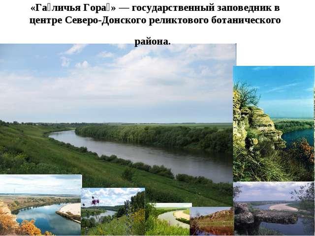 «Га́личья Гора́»— государственный заповедник в центре Северо-Донского реликт...