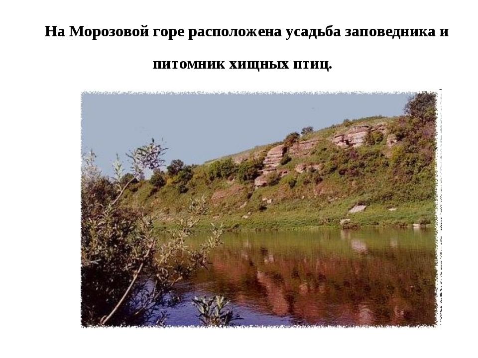 На Морозовой горе расположена усадьба заповедника и питомник хищных птиц.
