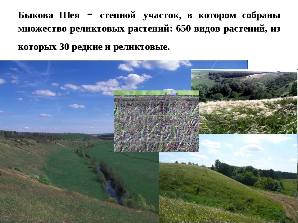 Быкова Шея - степной участок, в котором собраны множество реликтовых растений...