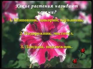 Какие растения называют часами? 1. Шиповник, цикорий, одуванчик. 2. Подорожни