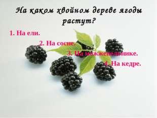 На каком хвойном дереве ягоды растут? 1. На ели. 2. На сосне. 3. На можжевель