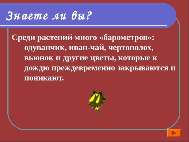 Знаете ли вы? Среди растений много «барометров»: одуванчик, иван-чай, чертопо...