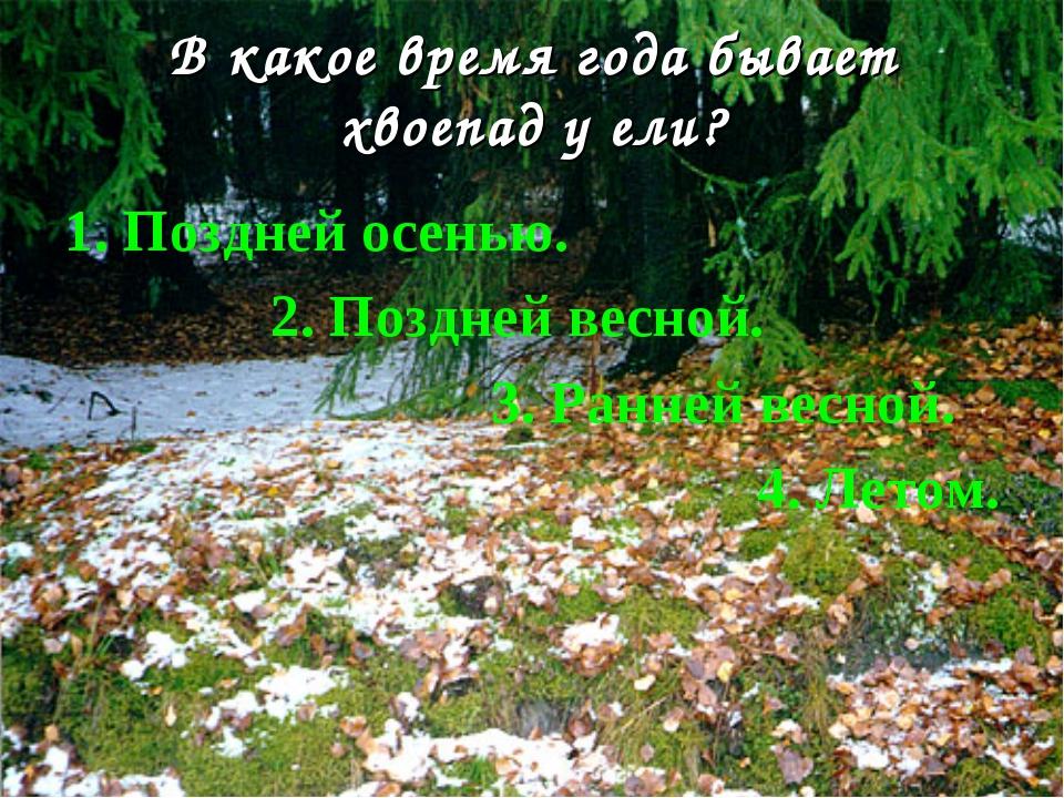 В какое время года бывает хвоепад у ели? 1. Поздней осенью. 2. Поздней весной...