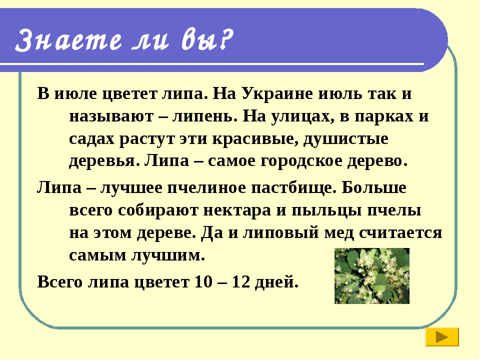 Знаете ли вы? В июле цветет липа. На Украине июль так и называют – липень. На...