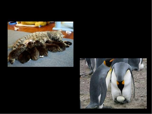 3.Способность к размножению: