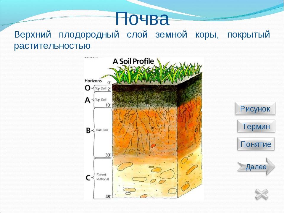Почва Верхний плодородный слой земной коры, покрытый растительностью