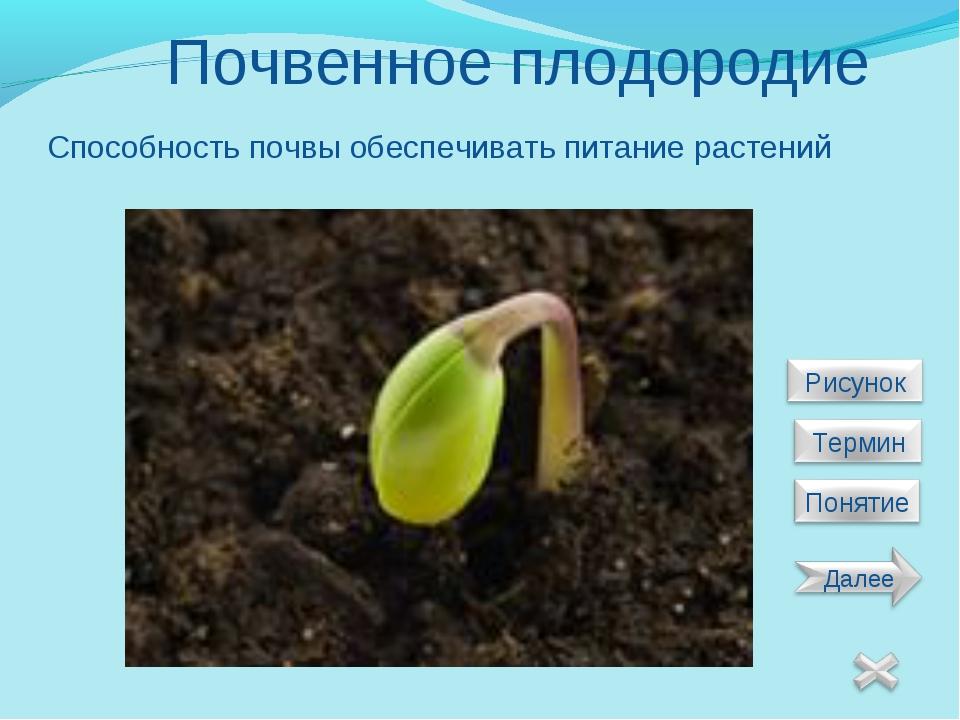 Почвенное плодородие Способность почвы обеспечивать питание растений