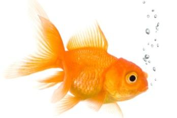 fishistock_000004058037small8.jpg