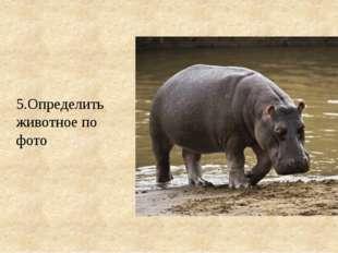 5.Определить животное по фото