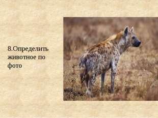 8.Определить животное по фото