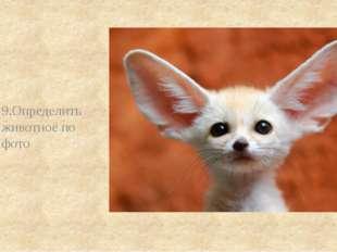 9.Определить животное по фото