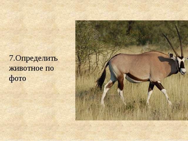 7.Определить животное по фото