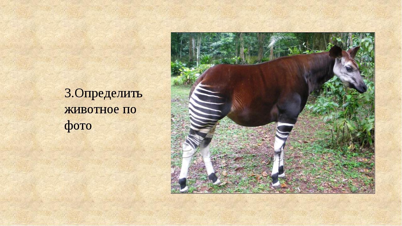 3.Определить животное по фото